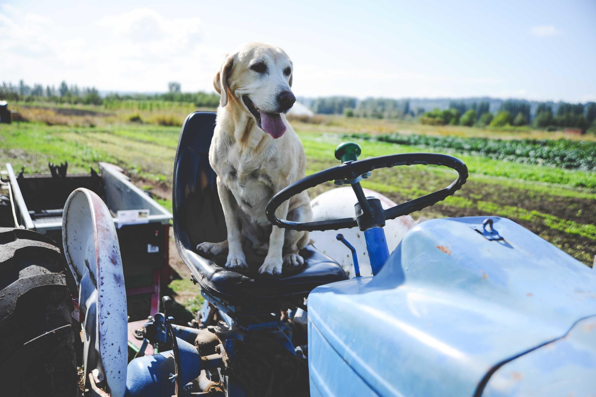 Bailey at the farm