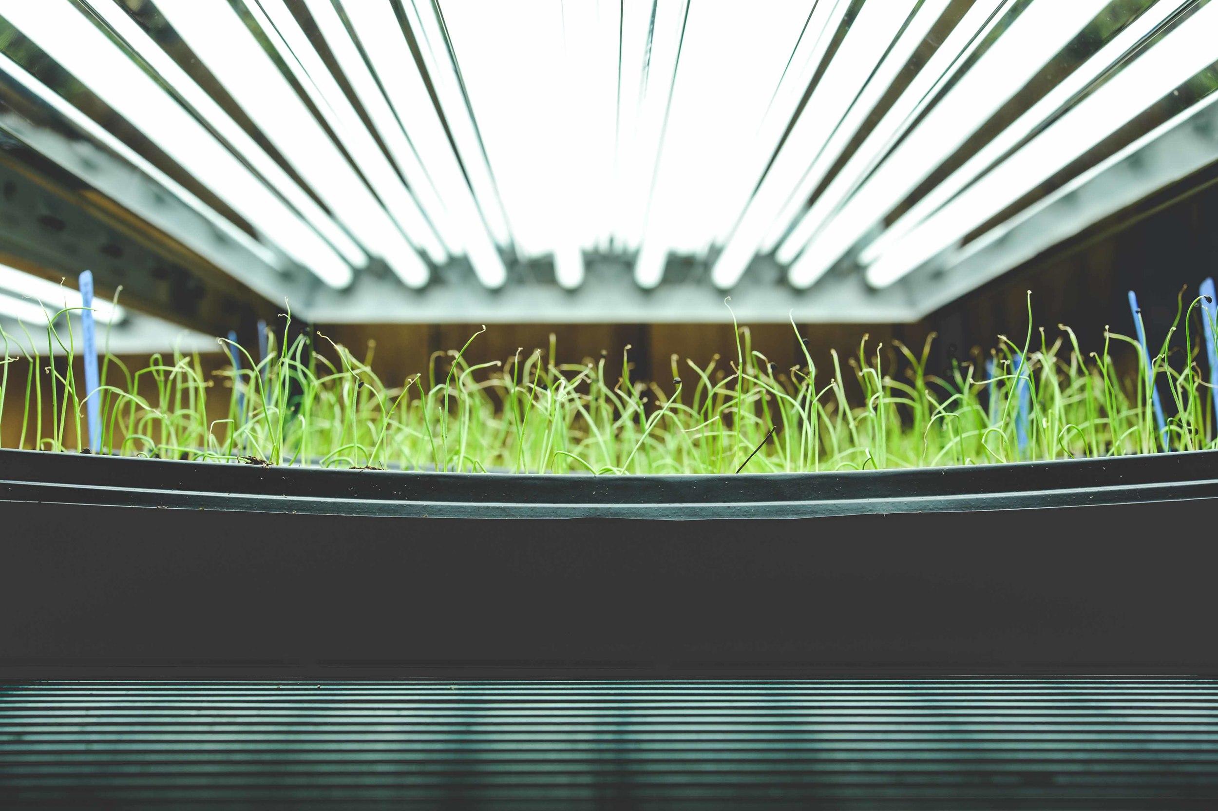 plant propagation station