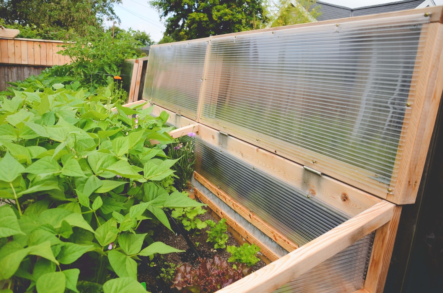 Extra vegetable garden raised beds with cold frames by Seattle Urban Farm Co.