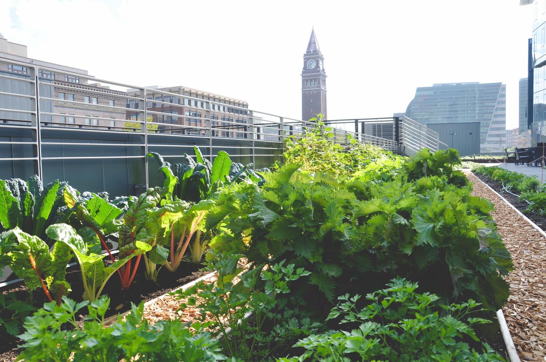 Seattle Urban Farm Company_Quality Athletics_Restaurant Farm.jpg