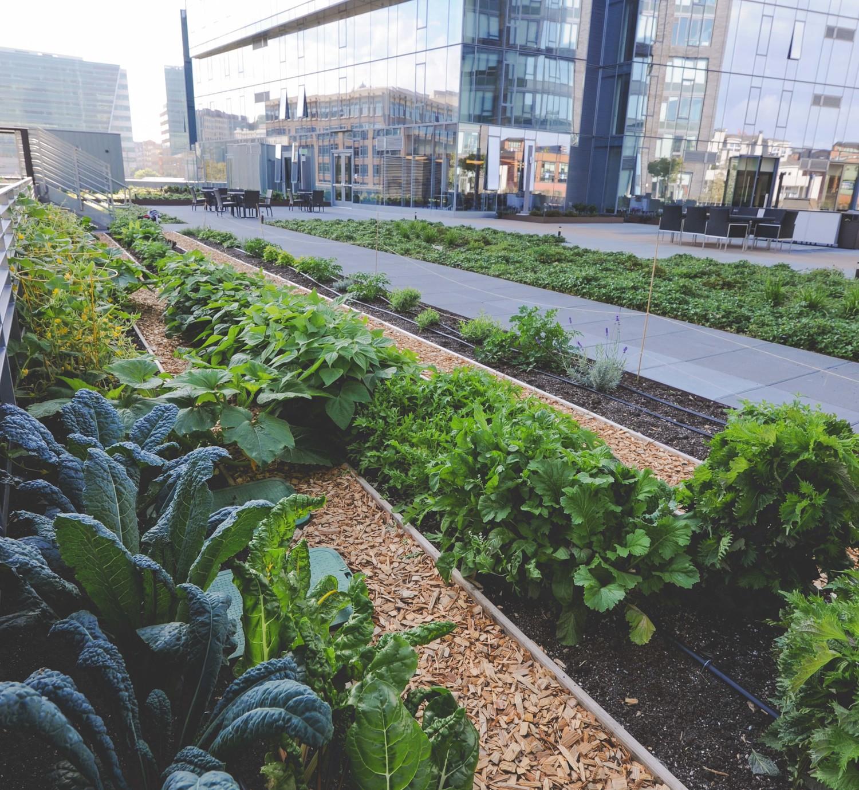 Seattle Urban Farm Company_Quality Athletics_Vegetable Garden.jpg