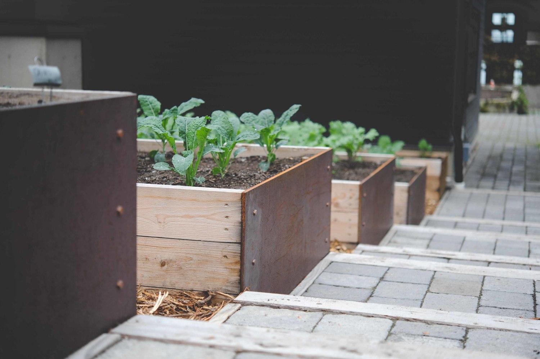 Terraced Vegetable Garden_Seattle Urban Farm Company.jpg