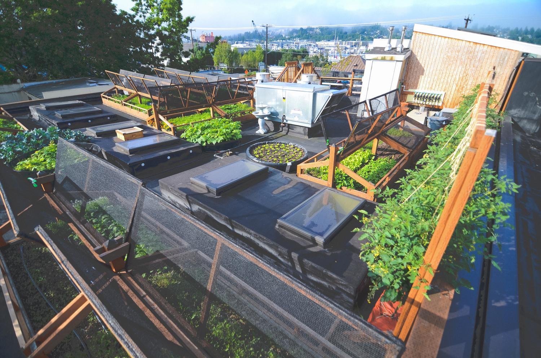 Bastille Seattle Seattle Urban Farm Company