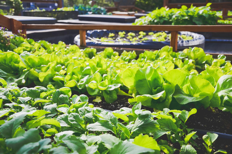 Bastille Rooftop_Restaurant Vegetable Garden3_Seattle Urban Farm Company.jpg