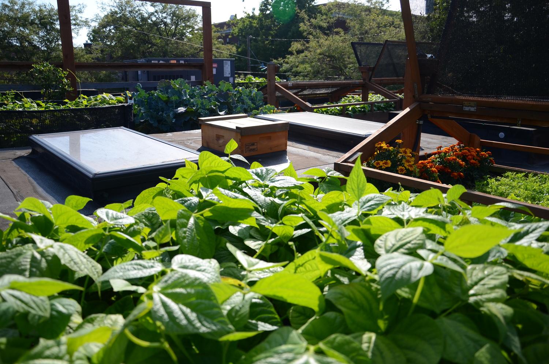 Bastille Rooftop_Restaurant Vegetable Garden6_Seattle Urban Farm Company.jpeg