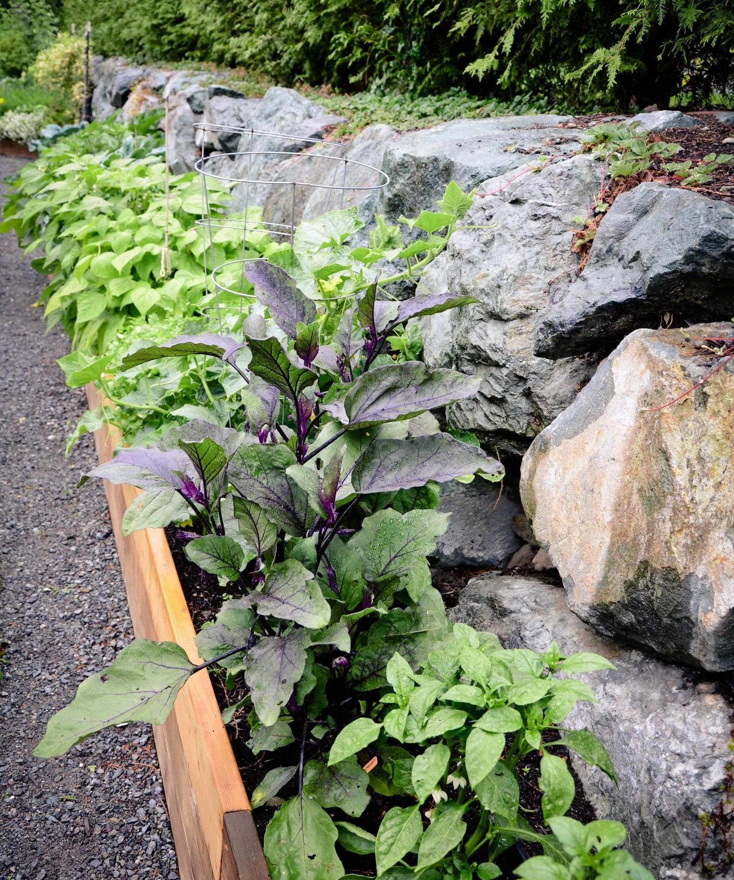 Long Raised Bed Vegetable Garden_Seattle Urban Farm Company