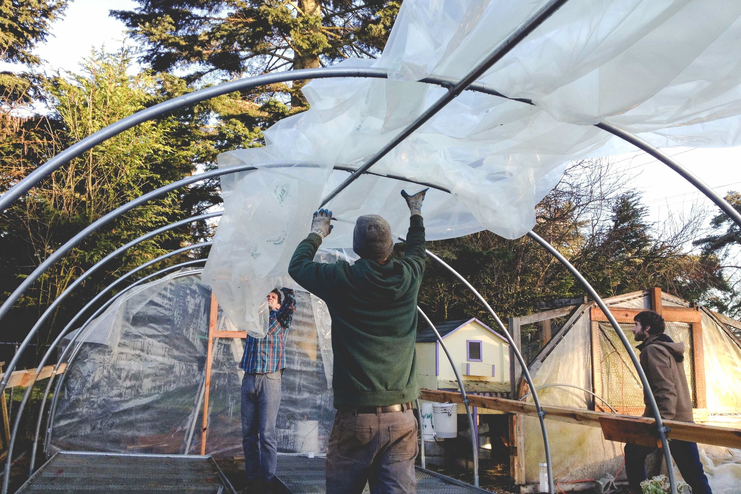 Building New Greenhouses at Seattle Urban Farm Company
