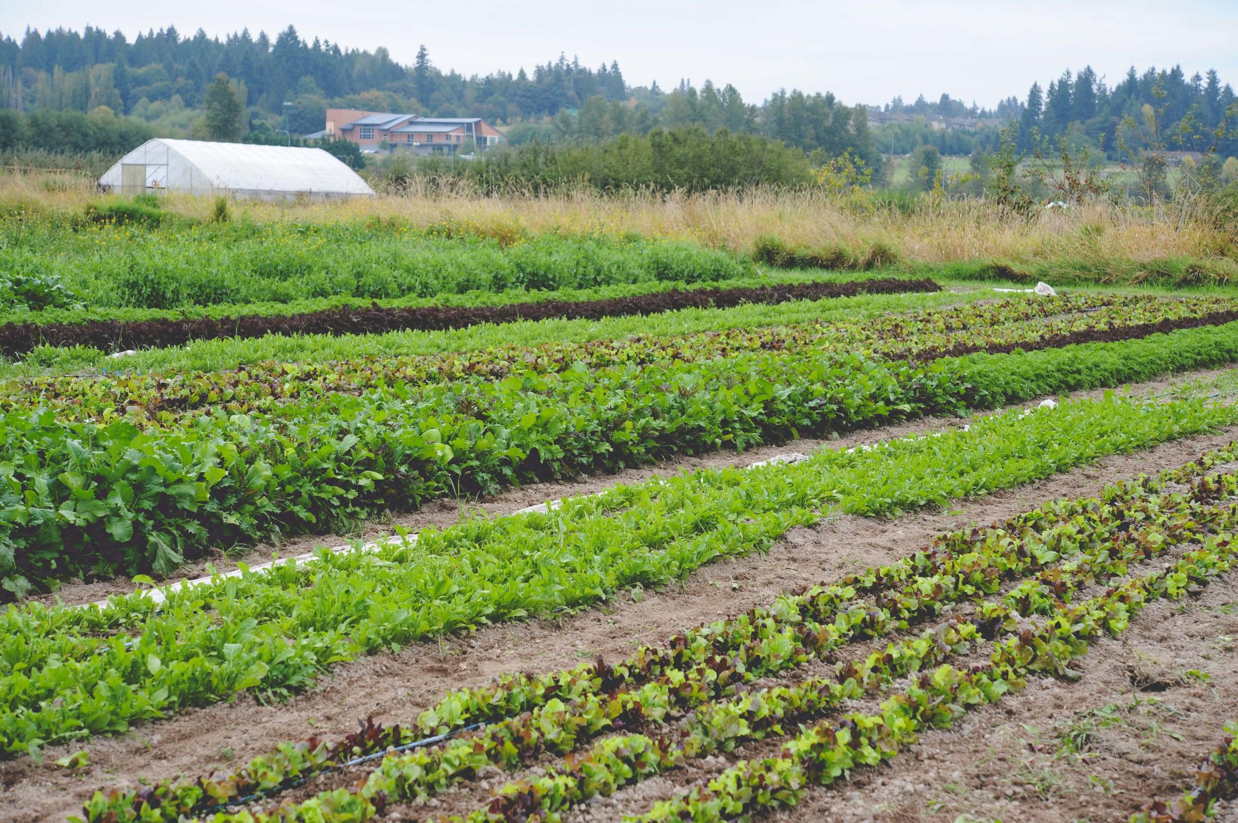 Urban Fringe Farm_Seattle Urban Farm Co