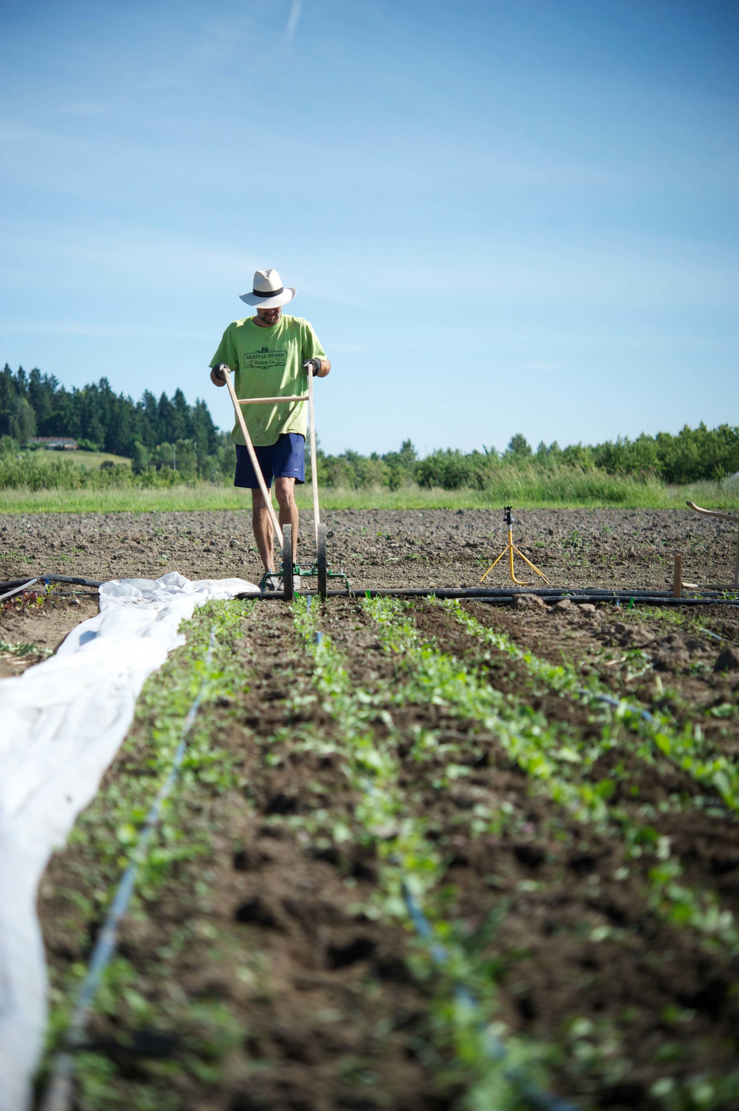Urban Fringe Farm_Brad Halm_Seattle Urban Farm Co