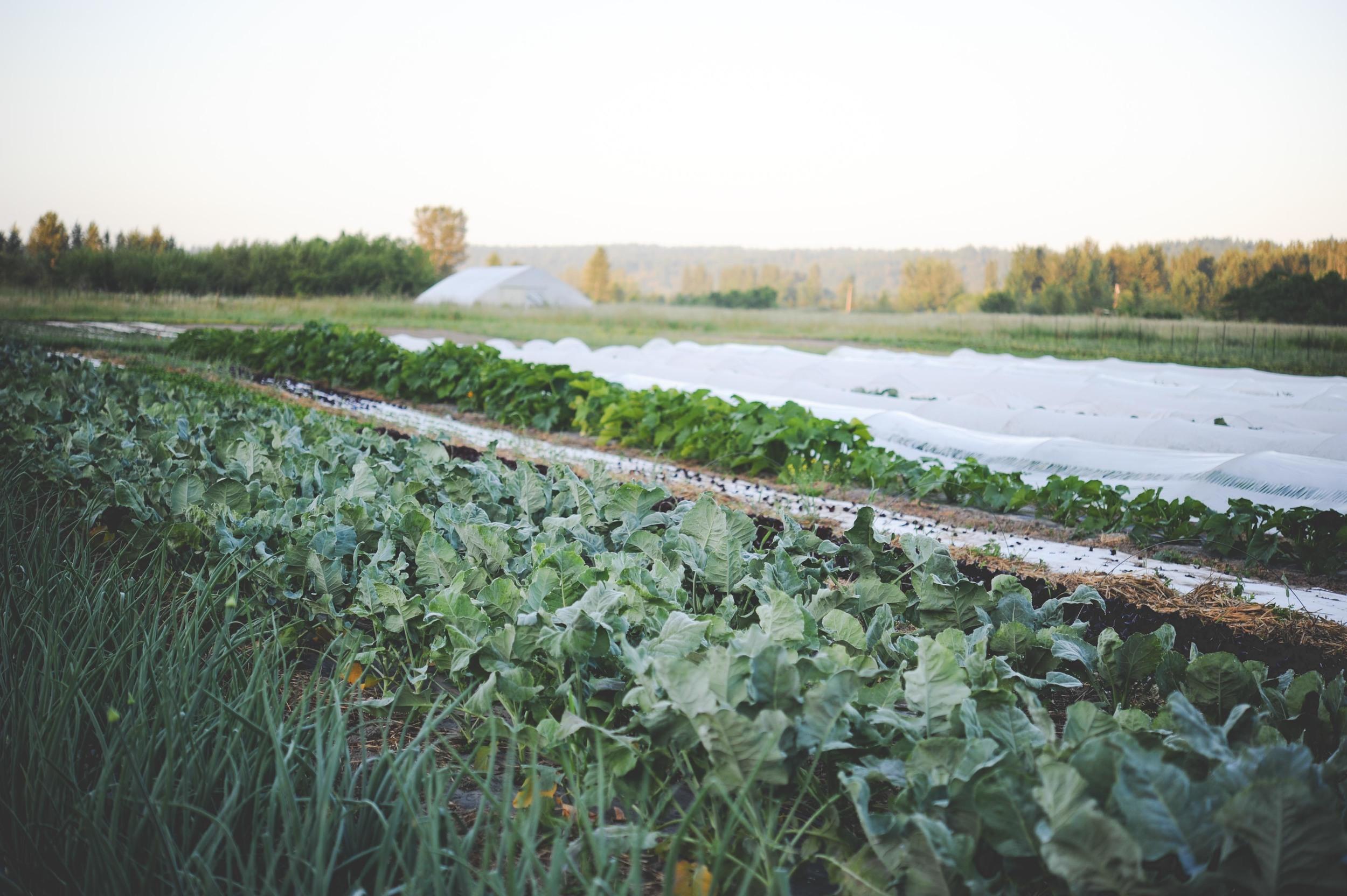 Urban Fringe Farm_Web-3.jpg