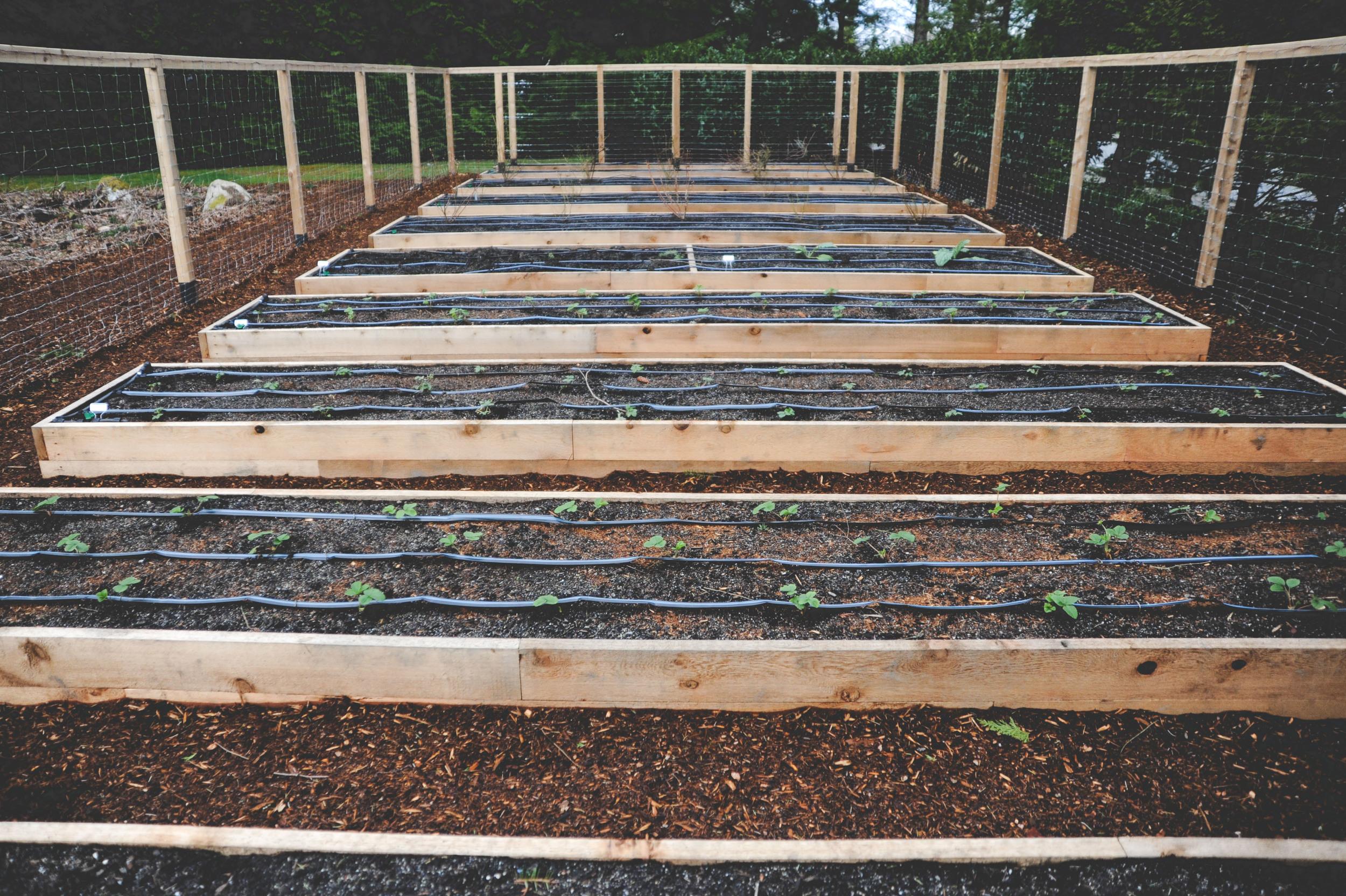 Raised Bed Perennial Garden with Deer Fence.jpg