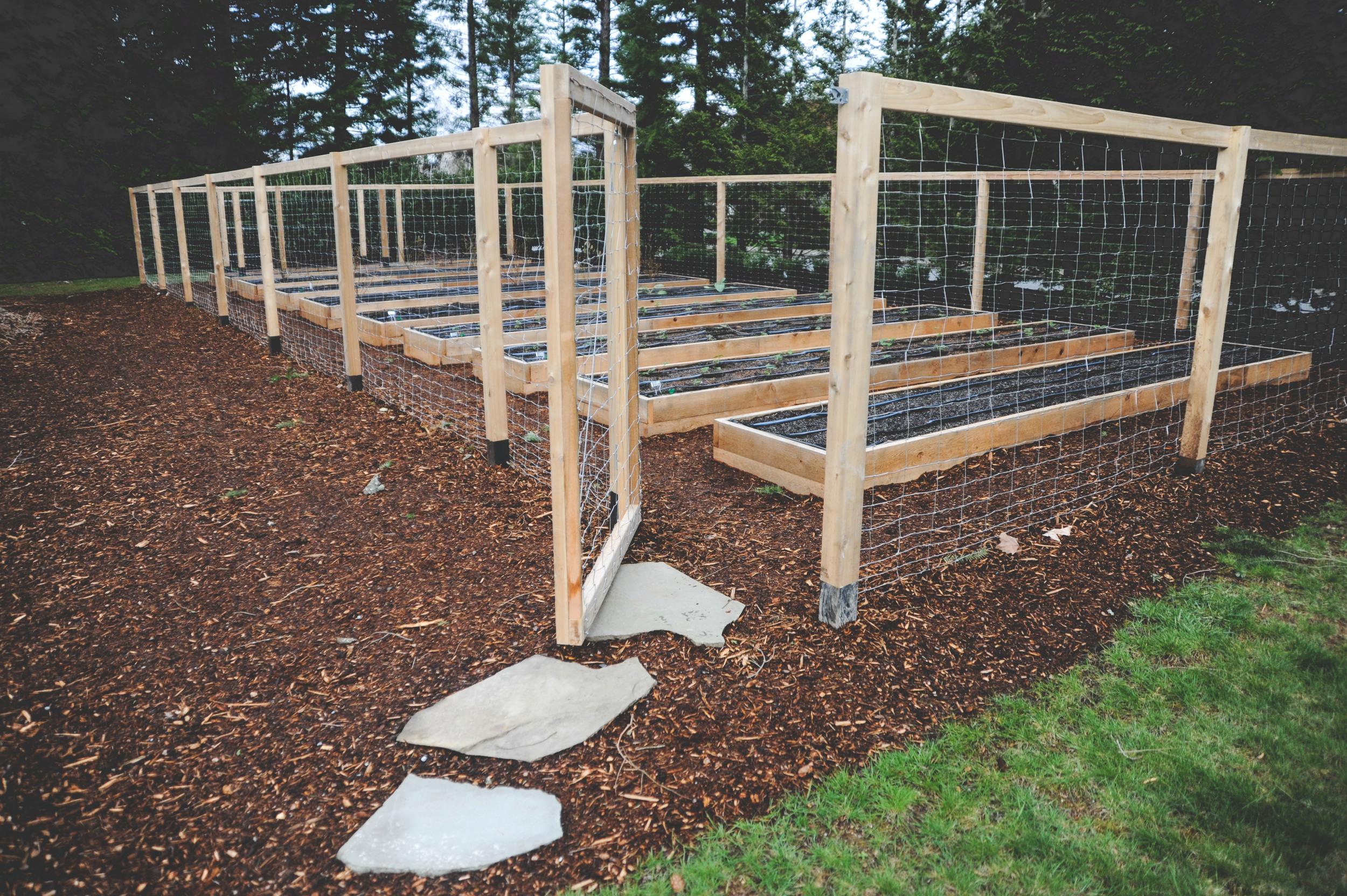 Raised Bed Perennial Garden with Deer Fence-2.jpg