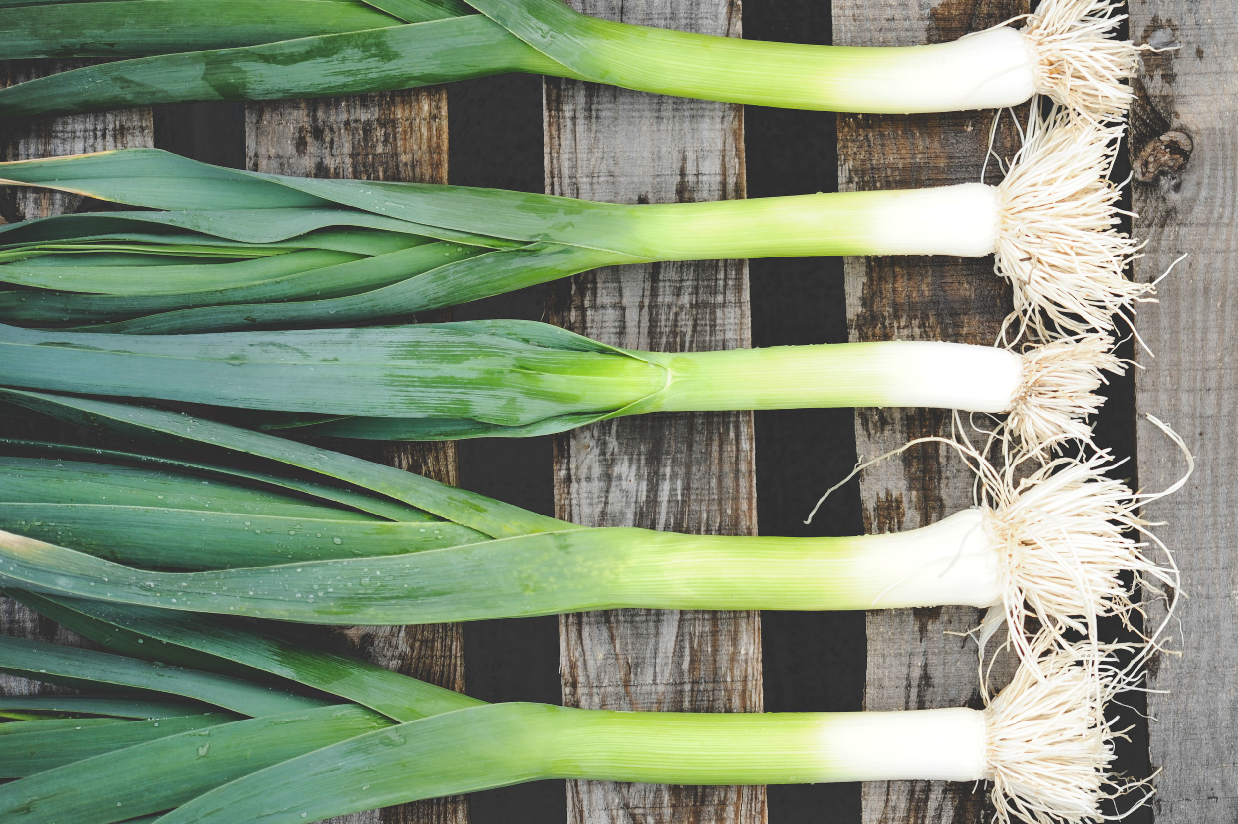 Leeks_Seattle Urban Farm Co.