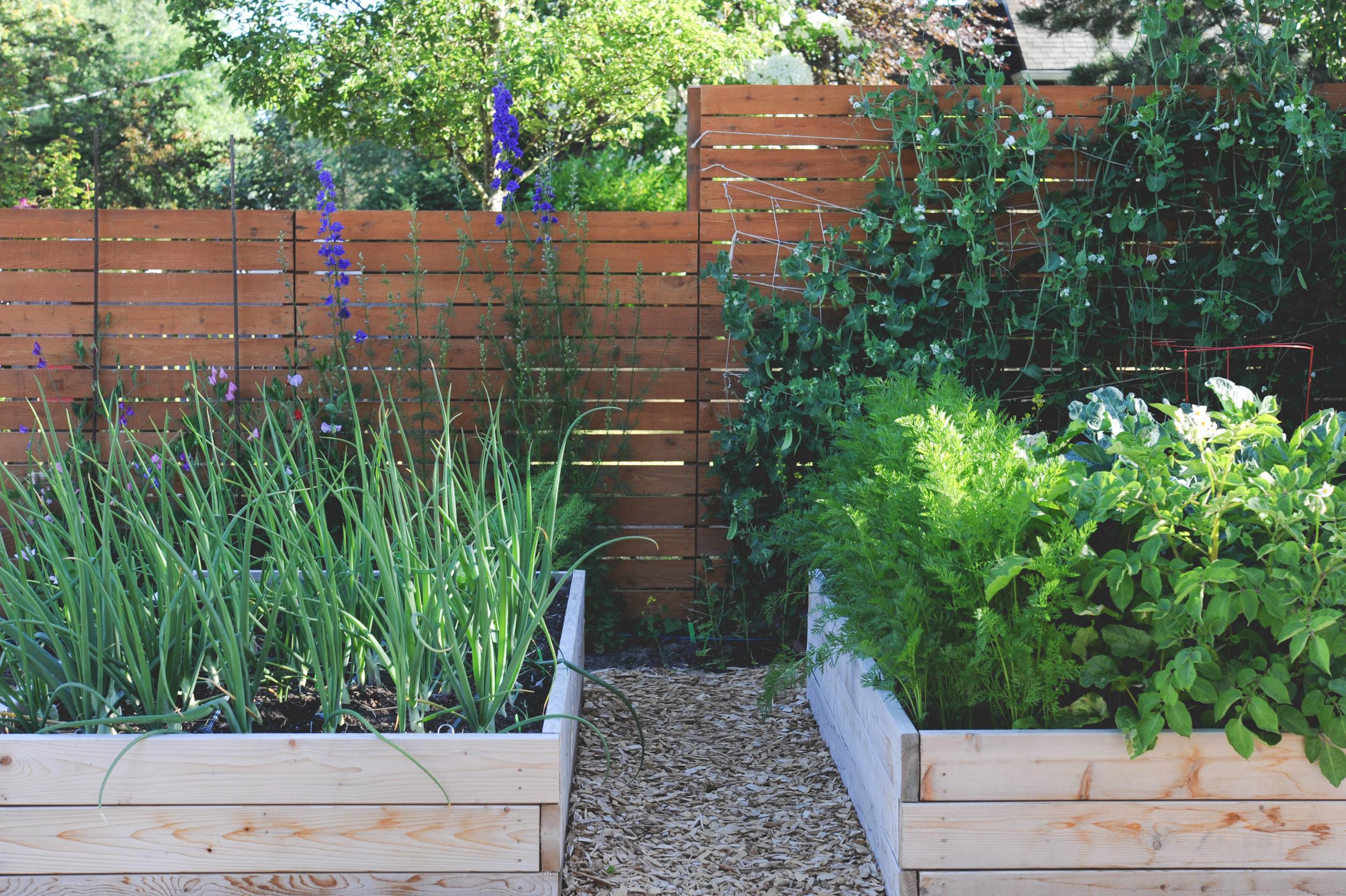 High-Yield Vegetable Gardening_Theresa Loe Podcast_Seattle Urban Farm Co.