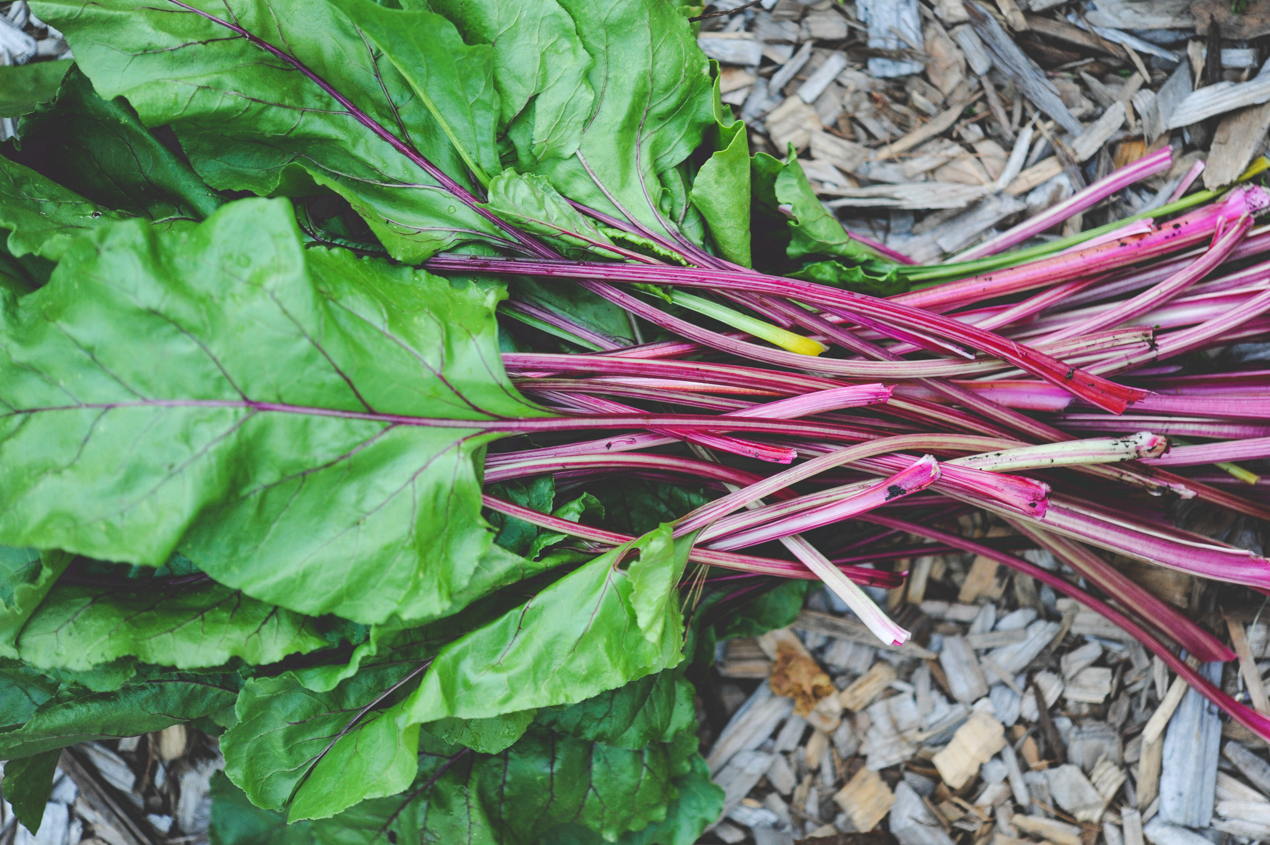 Encyclopedia Botanica Podcast_Seattle Urban Farm Co.