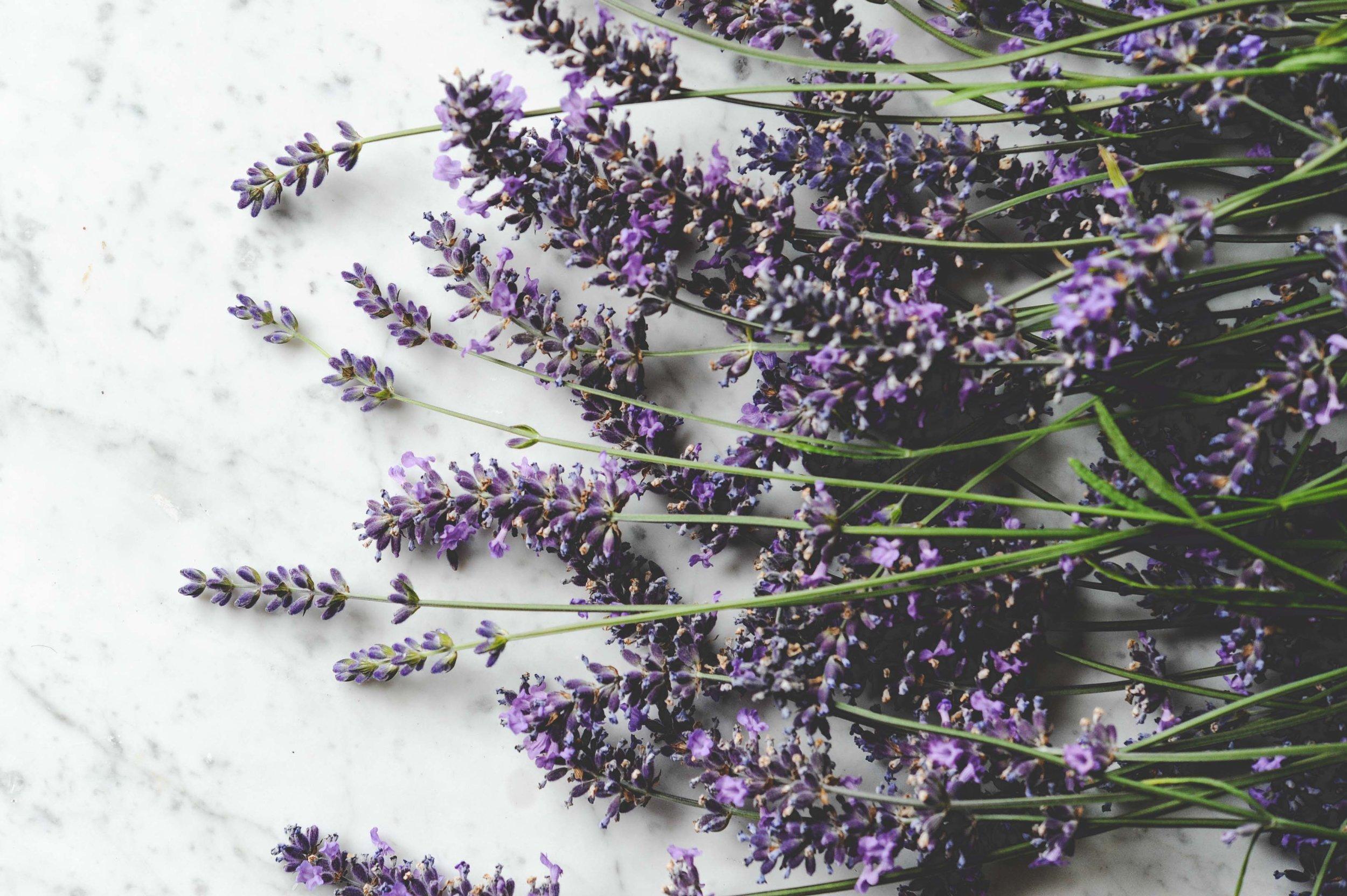 Lavender_Seattle Urban Farm Co.