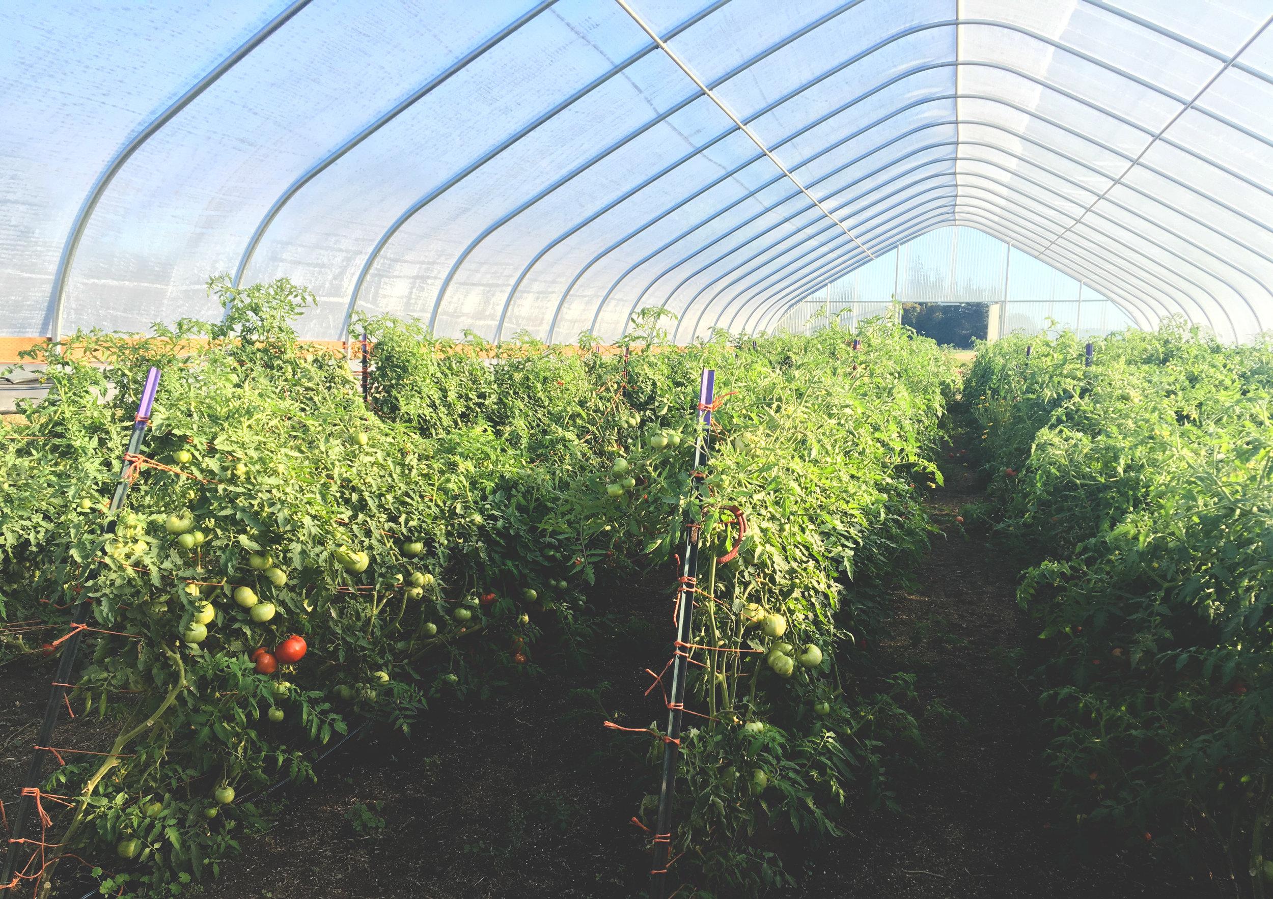 OSA Greenhouse_Seattle Urban Farm Co.