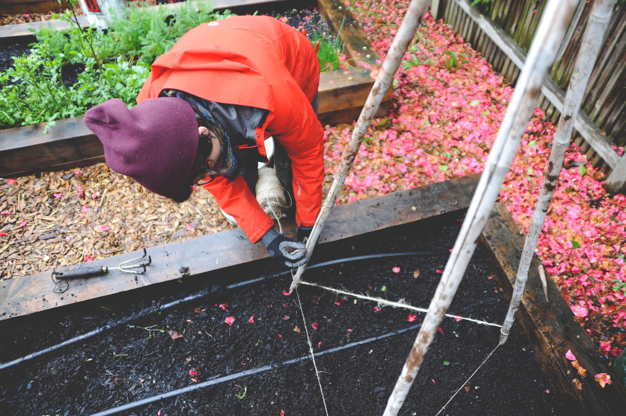 Planting right into a fall-composted garden in the spring.