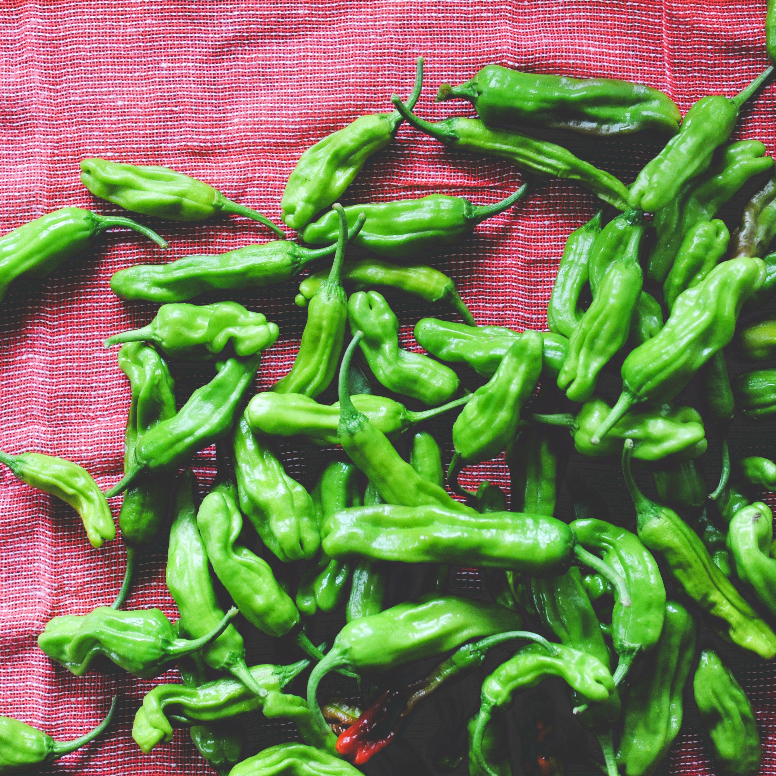 'Shishito' peppers