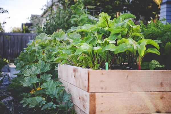 Smart Seed Ordering_Encyclopedia Botanica_Seattle Urban Farm Co.