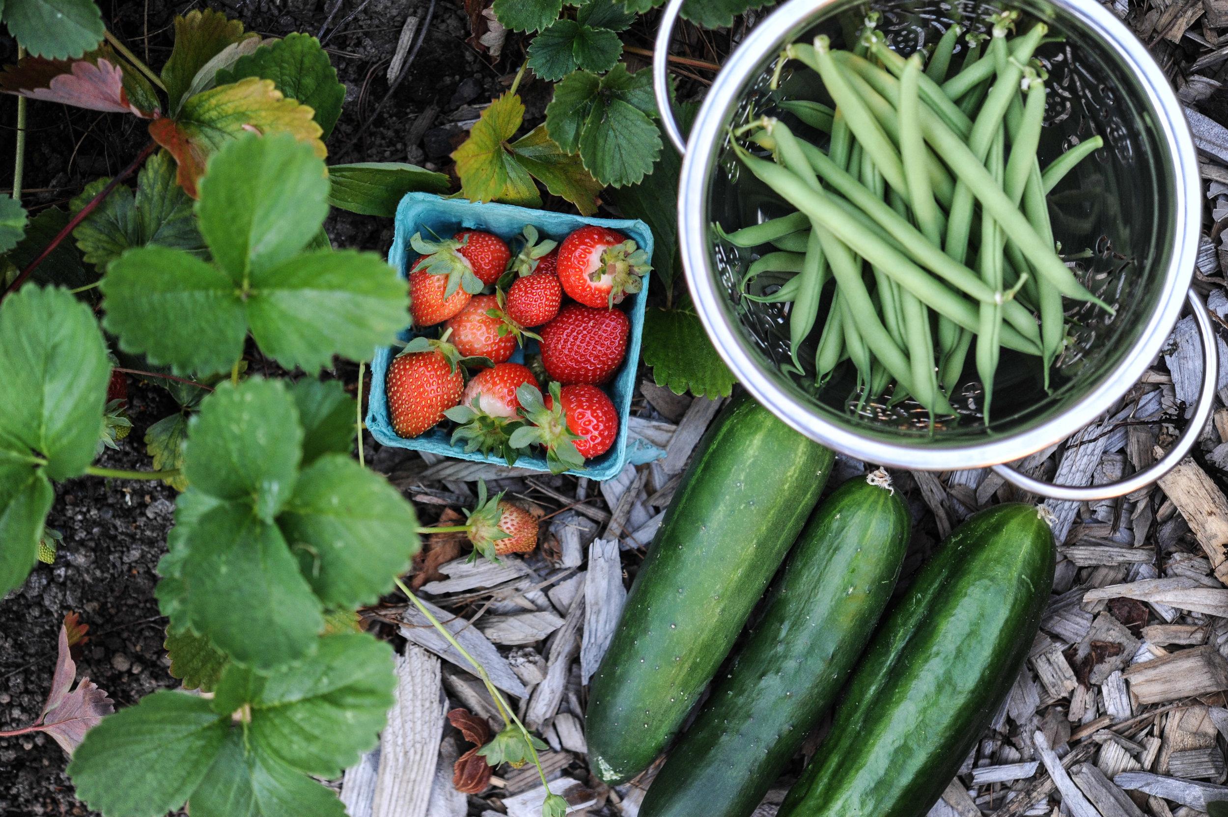 Cucumbers_EBpodcast_Seattle Urban Farm Co