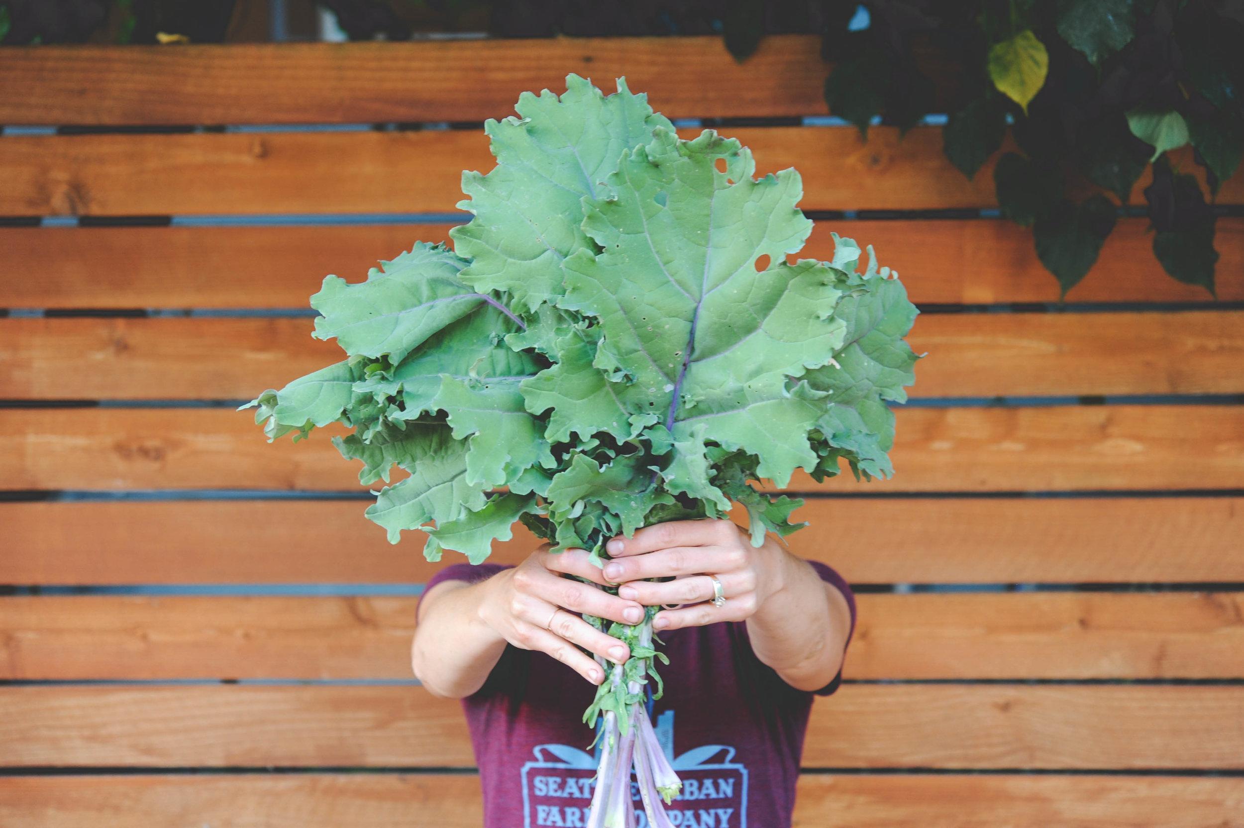 Red Russian Kale_Seattle Urban Farm Co
