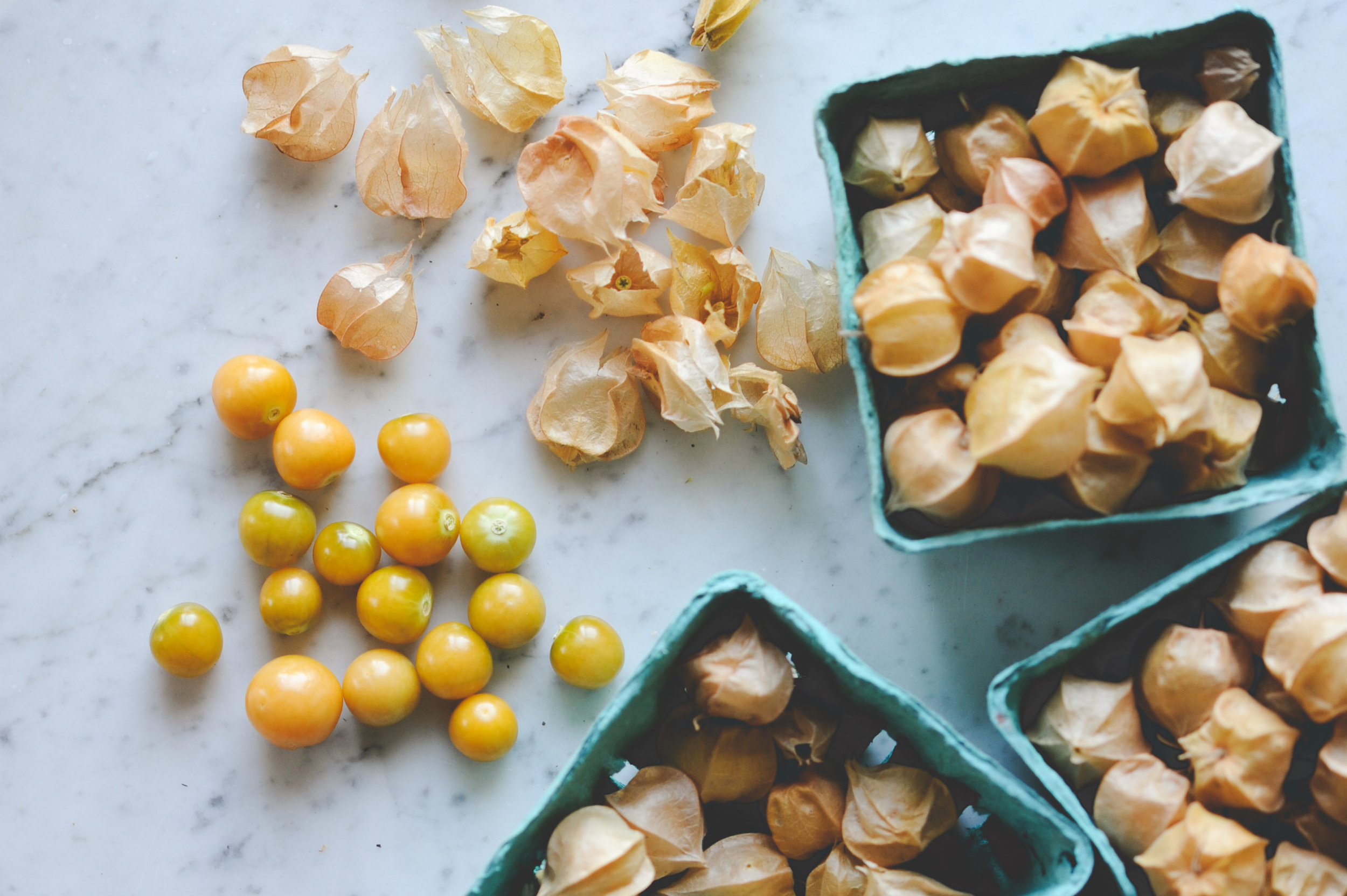Ground Cherries_Encyclopedia Botanica_Hilary Dahl.jpg