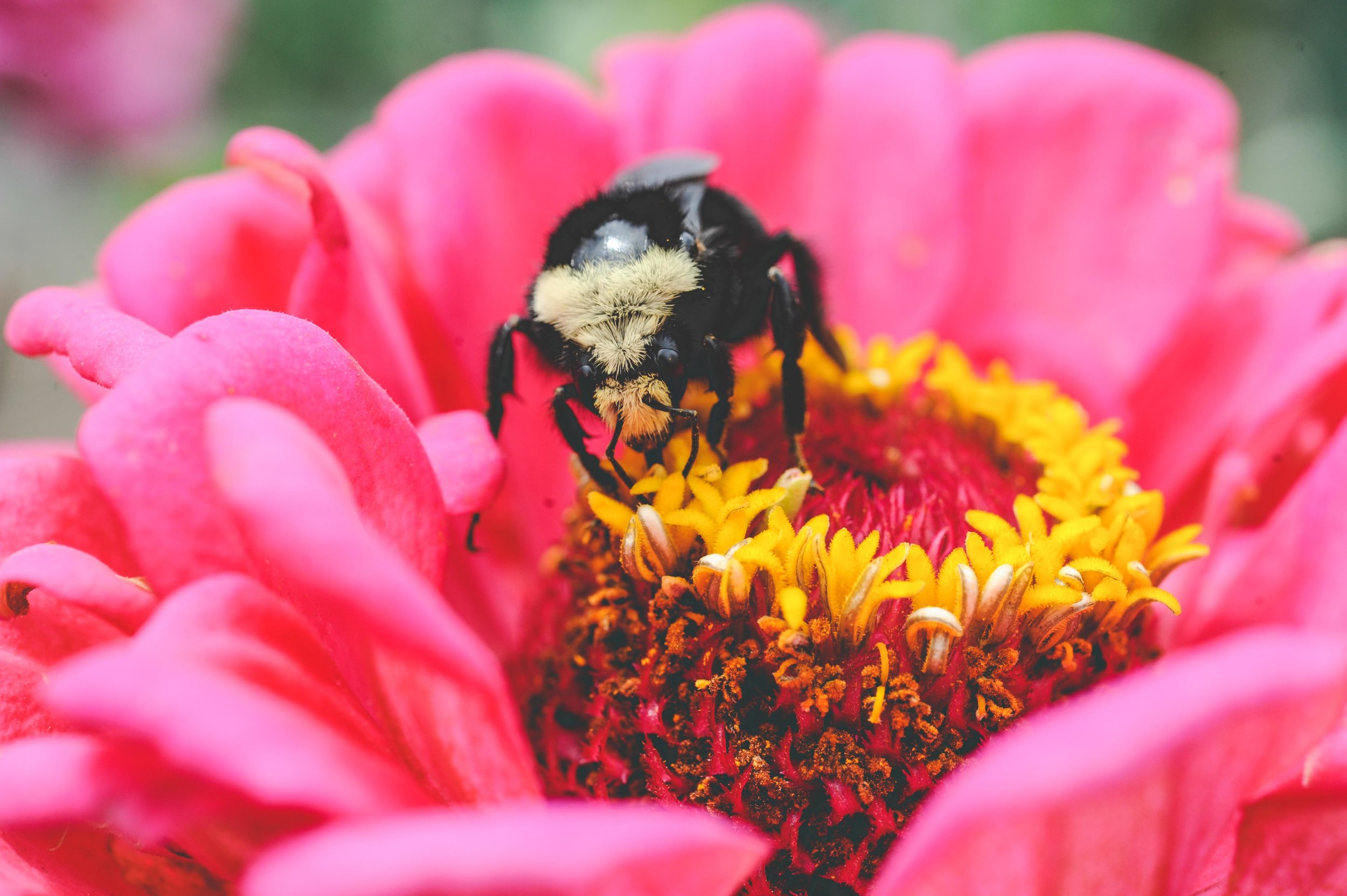 bumblebee_ blog.jpg