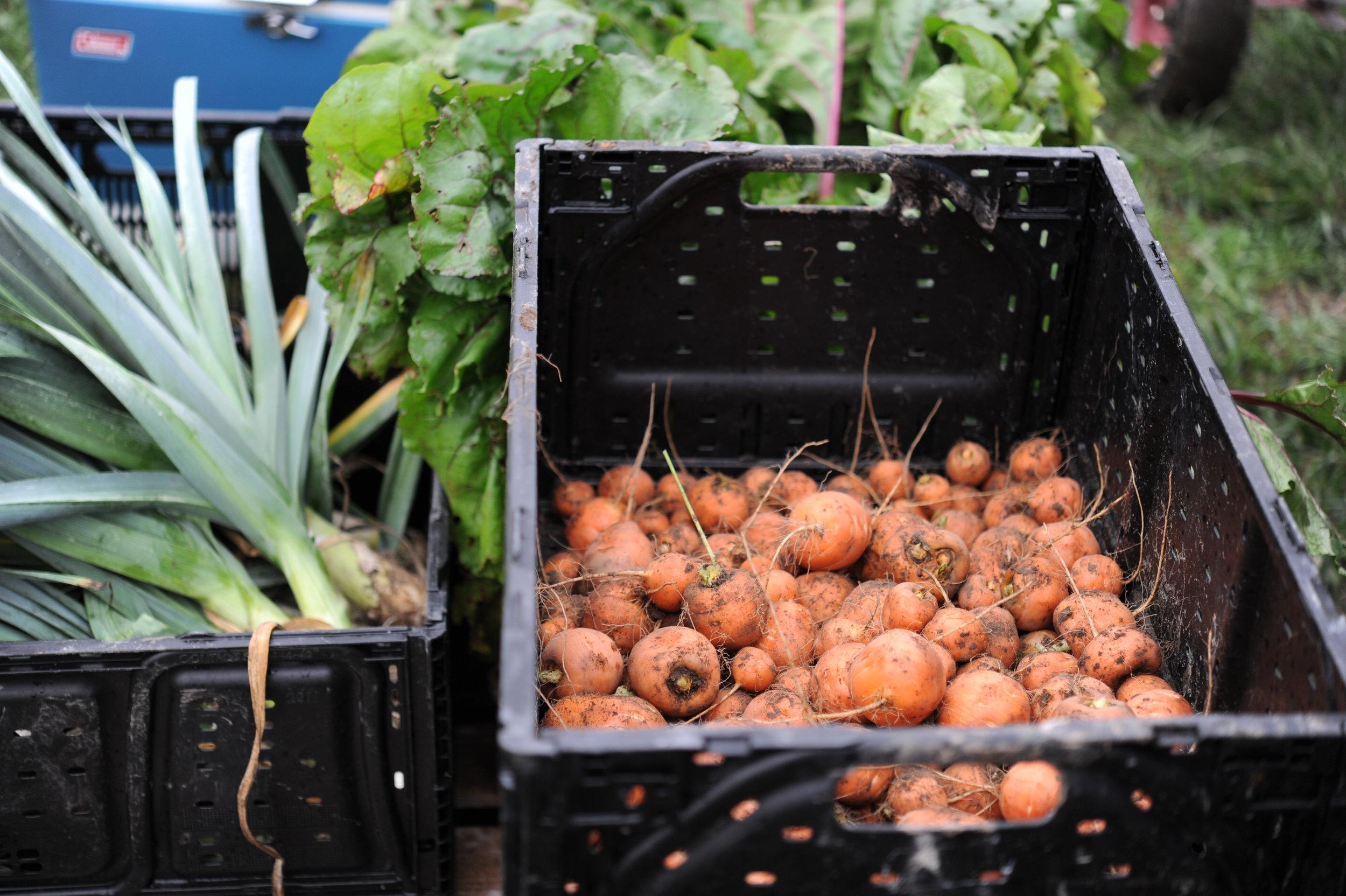 Parisian Market carrots