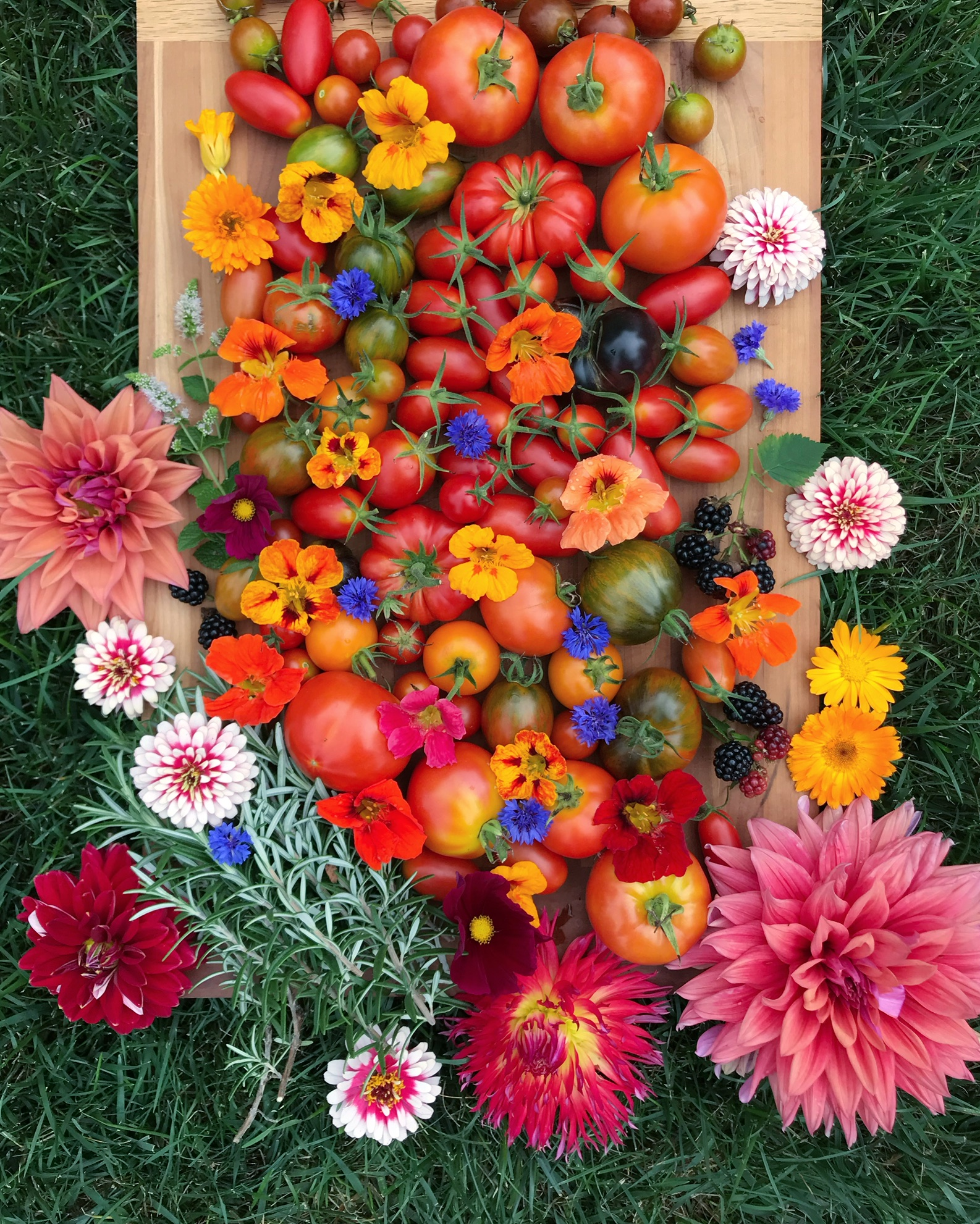 Summer harvest display by Sara Gasbarra