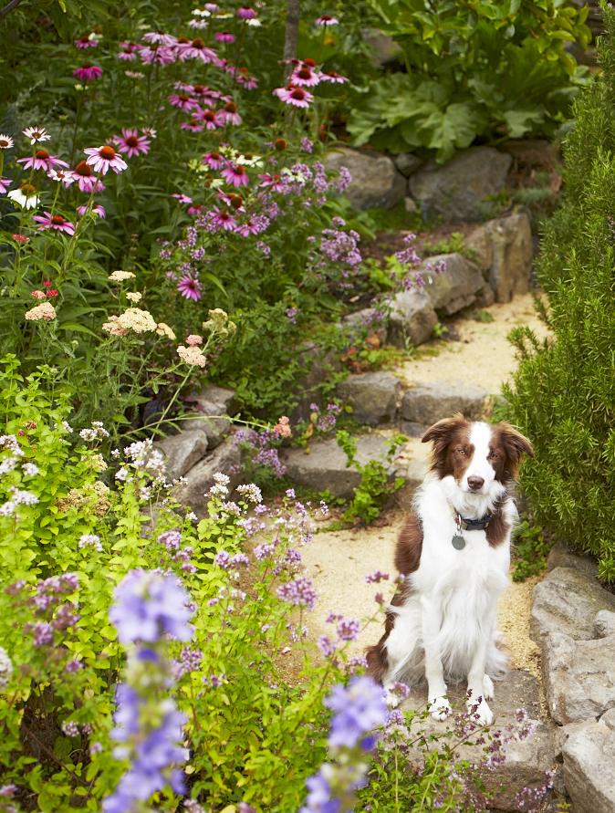 Dog in garden path