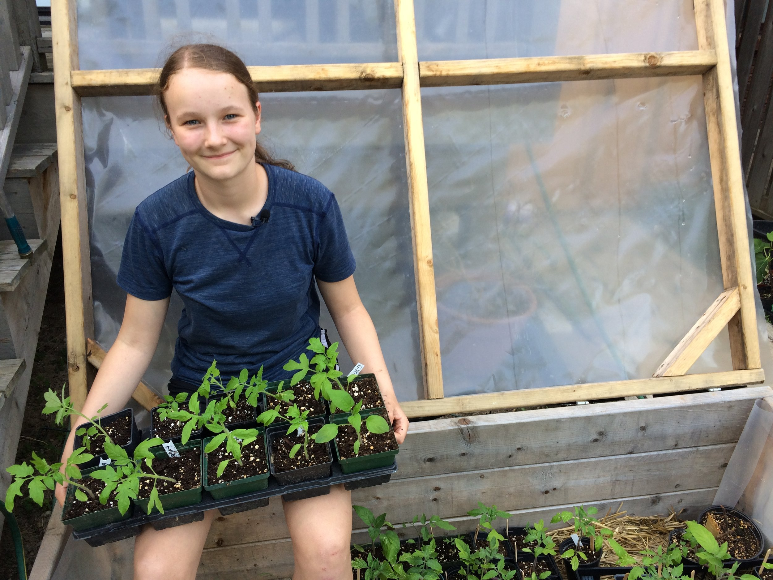 Emma Biggs and tomato transplants