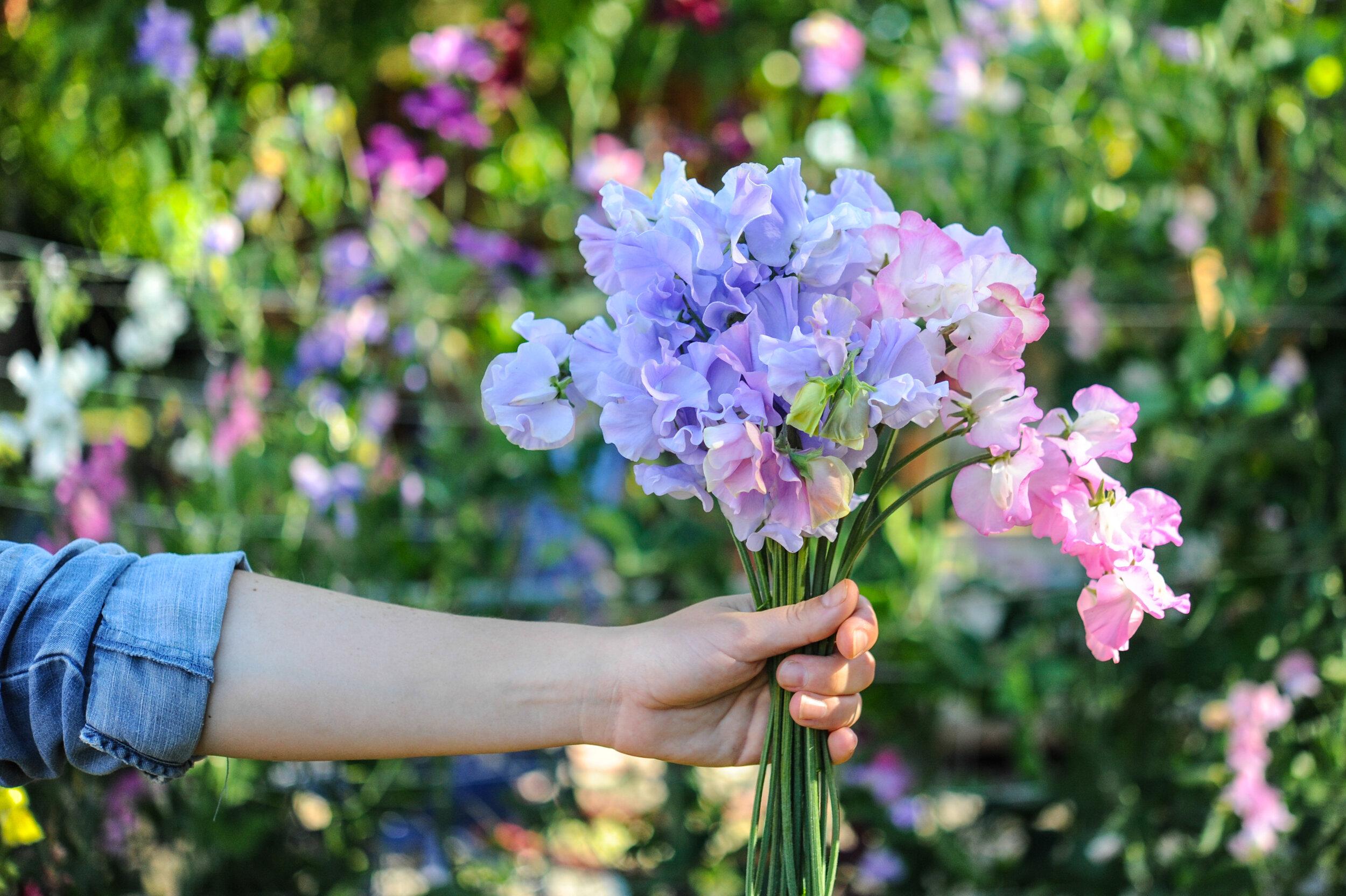 Episode 30 Planning Your Annual Cut Flower Garden Part 2