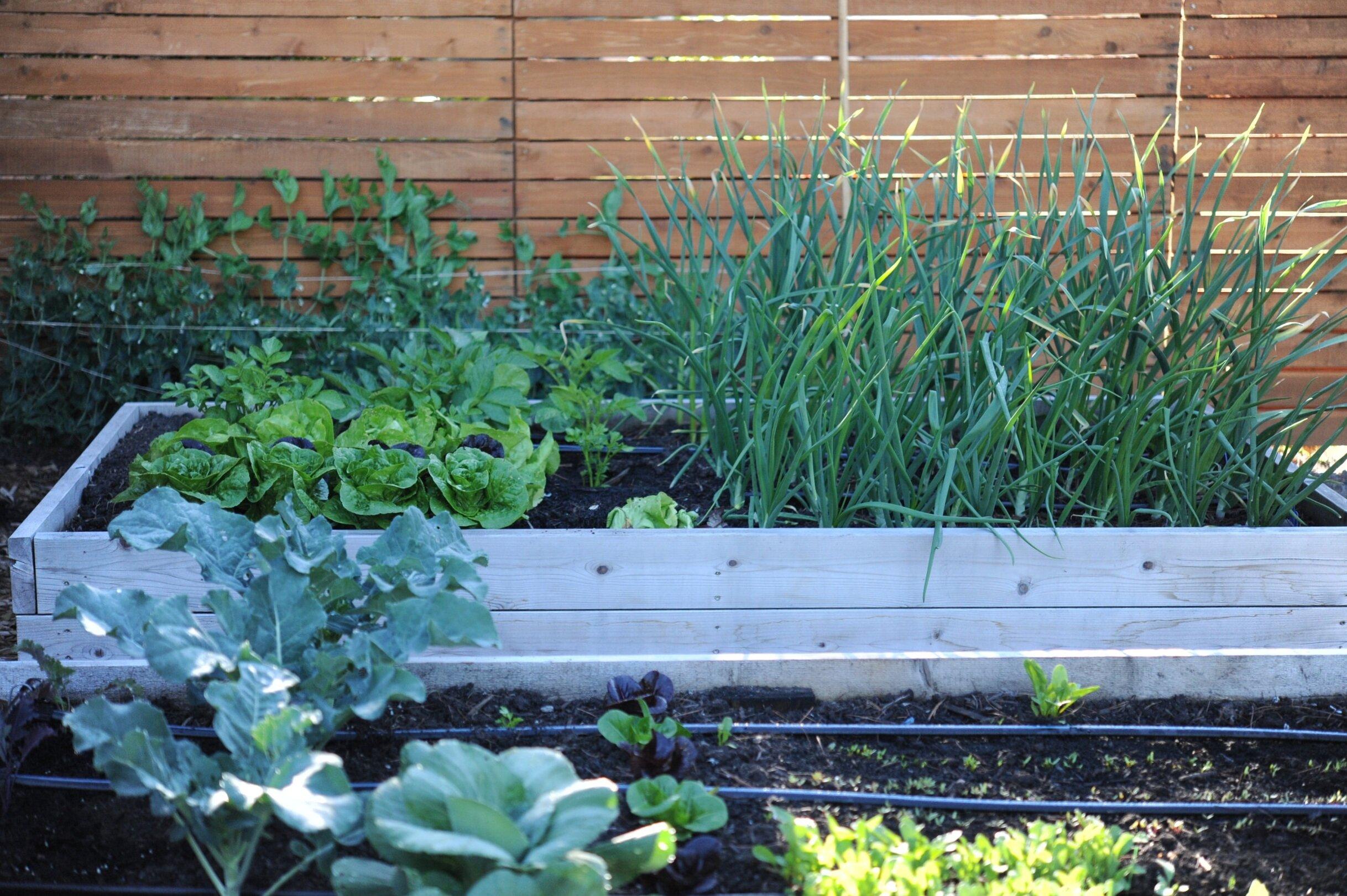 Garden Design Encyclopedia Botanica Podcast Seattle Urban Farm