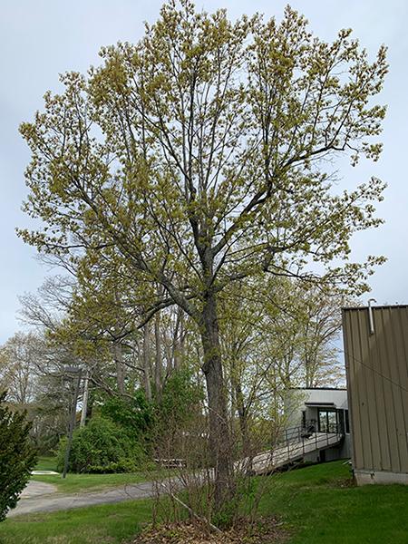 TreeForBlog2.jpg