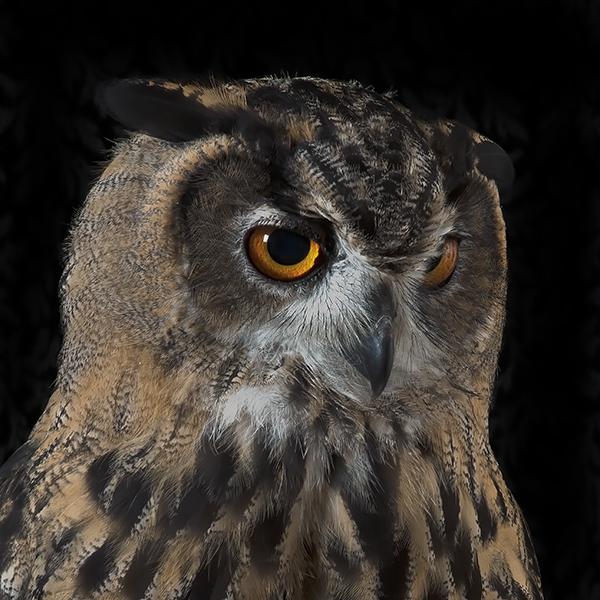 OwlThumb.jpg