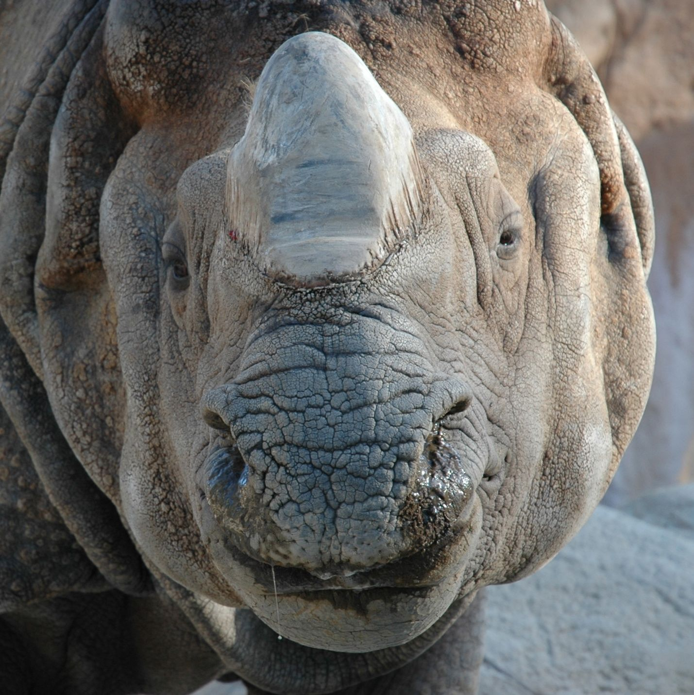 Yes, it's a rhino...