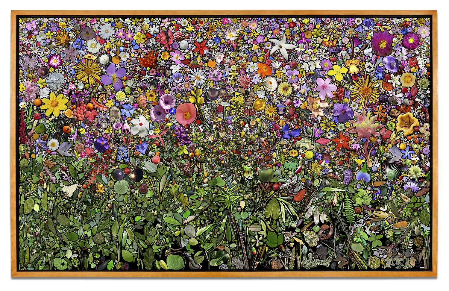 Simmons & Burke,  U.S. Plant Collection Palette , 2013, pigment print, 99 x 159 inches