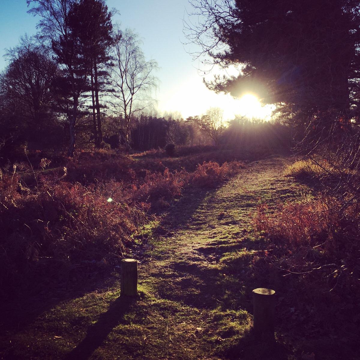 Acres of woodland walks