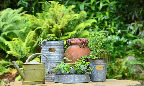 Vintage-Zinc-Pots-and-Planter-Gifts-Foras Stone.jpg