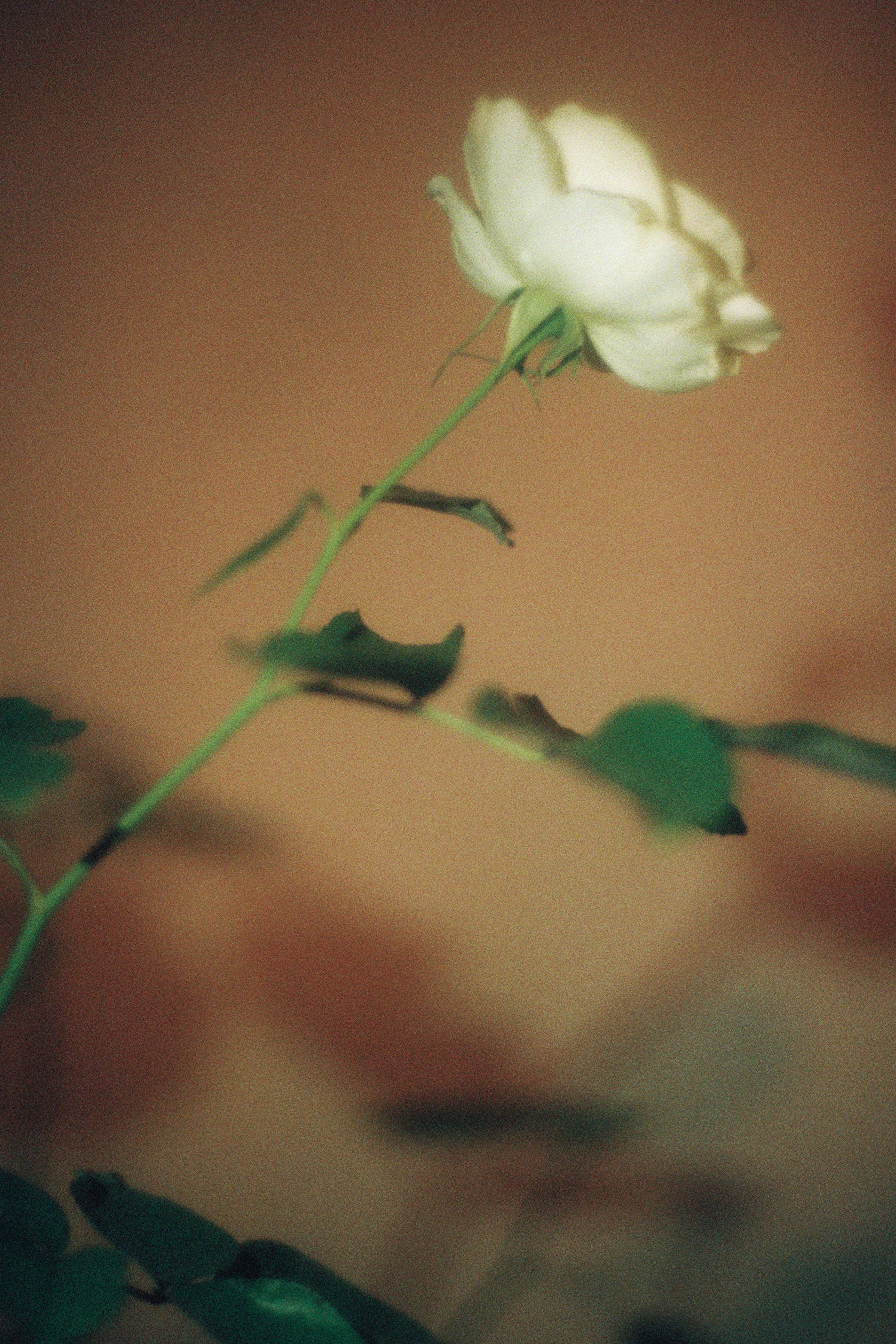 LARose_23.jpg