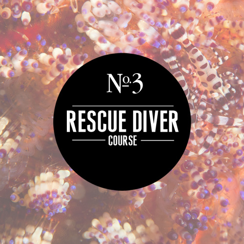 Learn more about our Rescue scuba class!