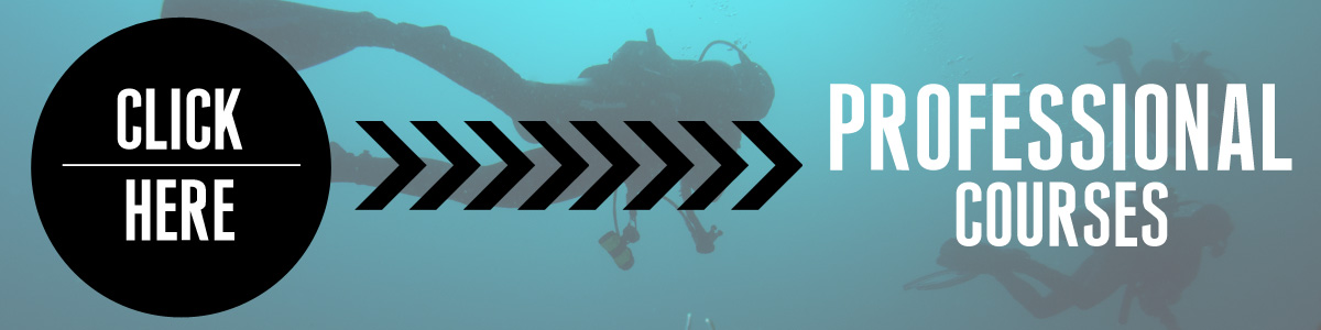 We offer professional scuba courses!