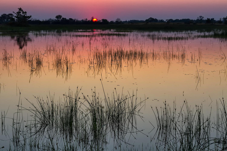 Okavango Delta Sunset | 50mm | 1/125th sec | f8 | ISO400
