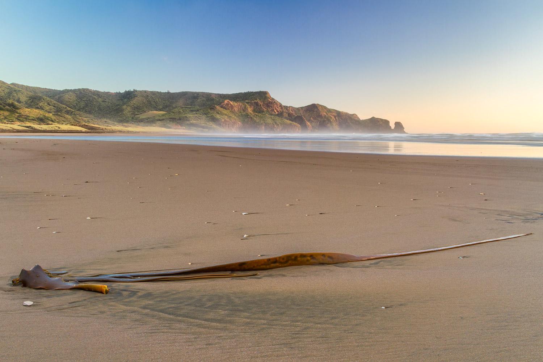 Bethells Beach seaweed | 20mm | 0.6sec | f/16 | ISO100