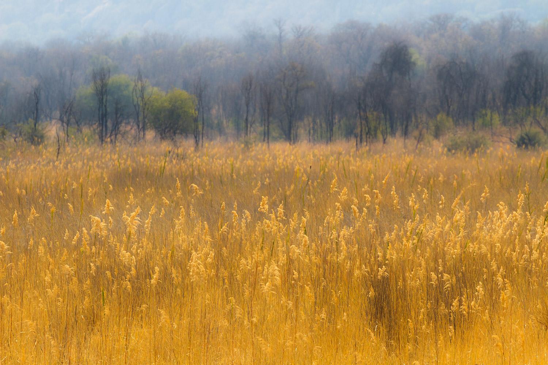 Matobo National Park | 300mm | 1/640th | f8.0 | ISO200