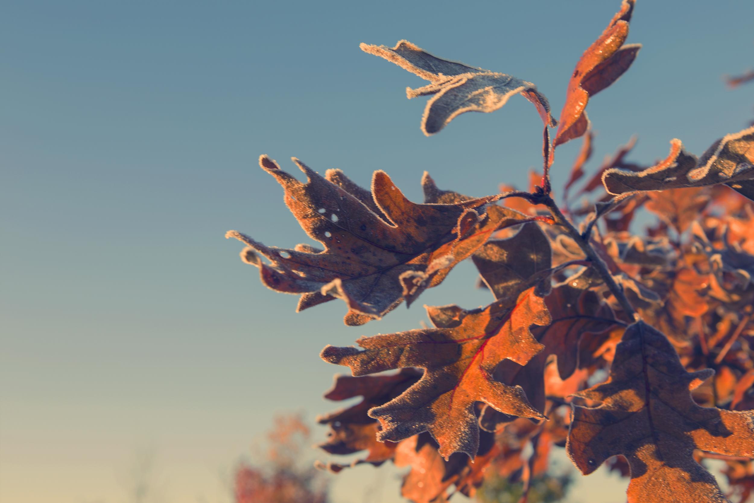 leaf3 copy.jpg