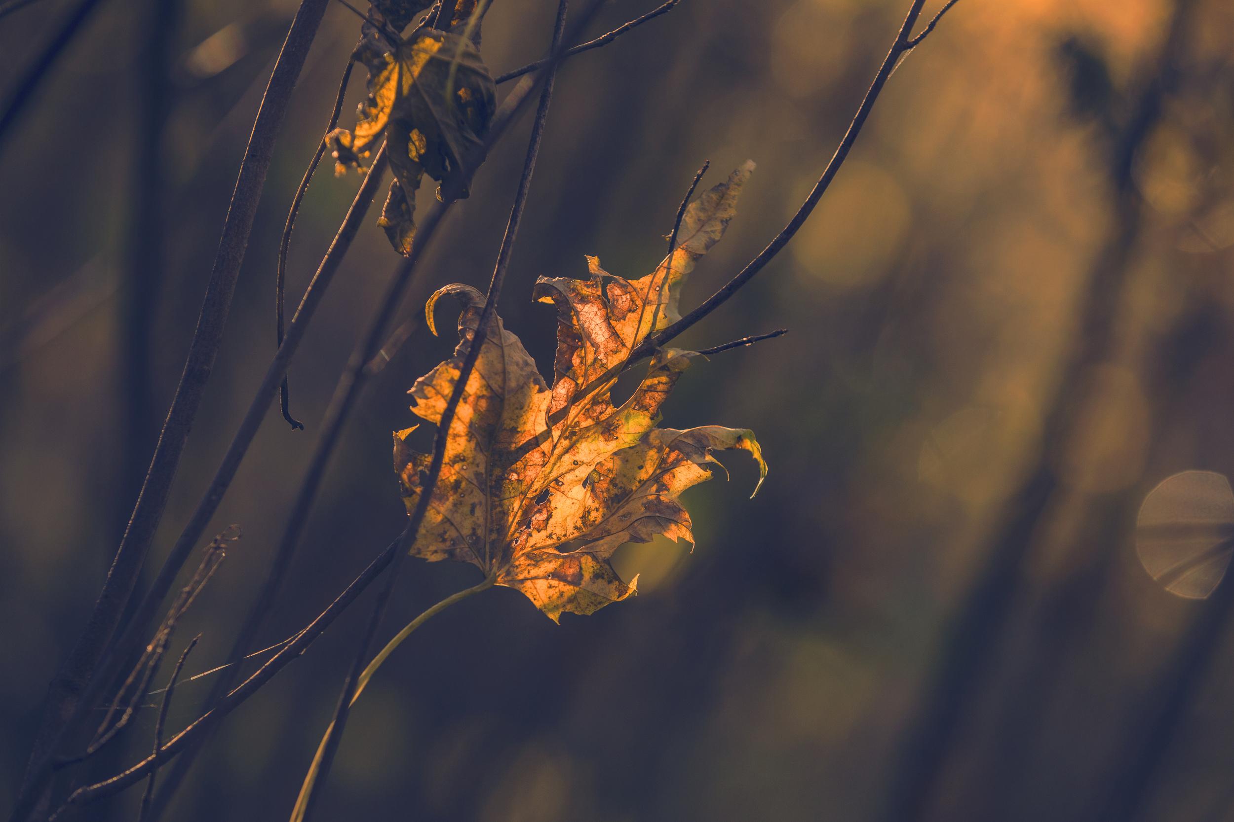 leaf-1 copy.jpg