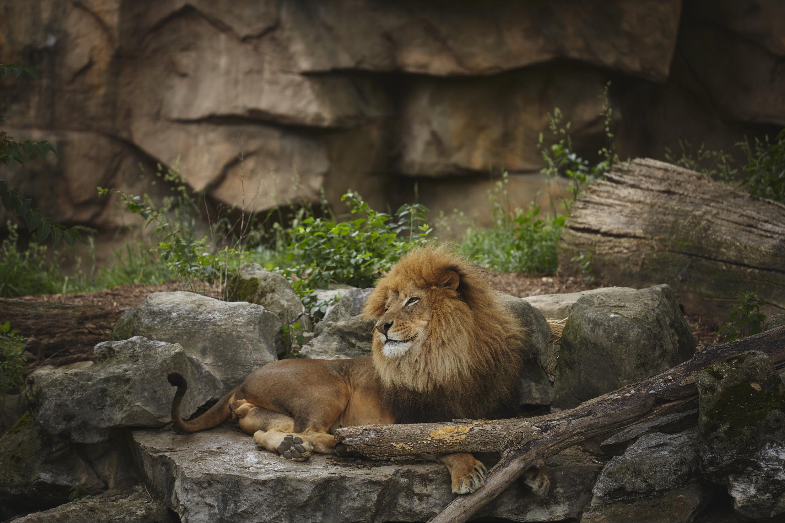 Zoo - BRphoto - 6I5A8834.jpg