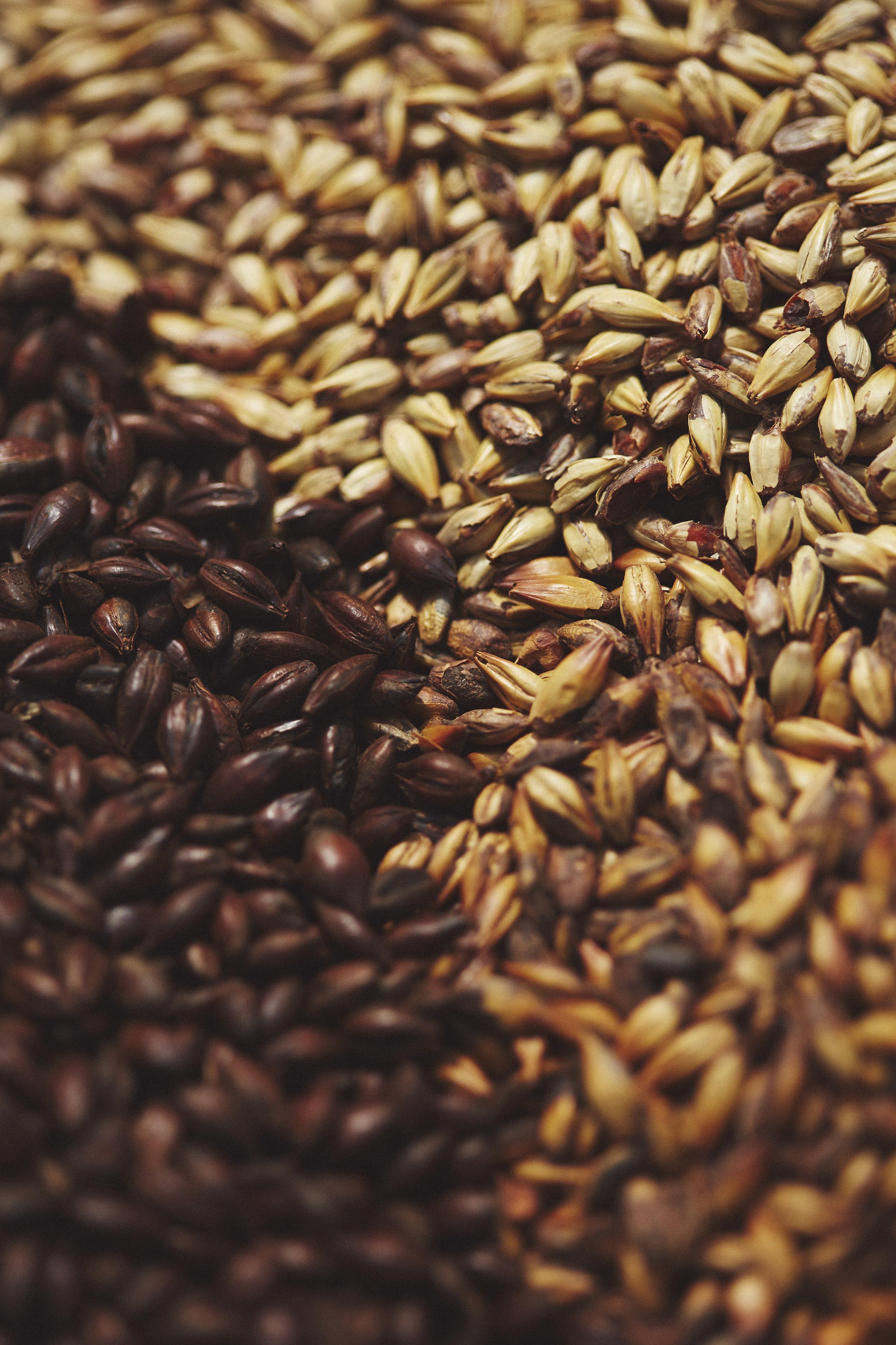 beer- benromangphoto - 6I5A9244.jpg